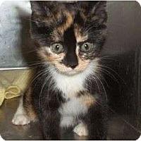 Adopt A Pet :: Betsy - McDonough, GA