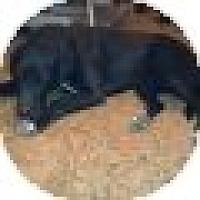 Adopt A Pet :: Little Bit - Denver, CO