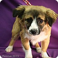 Adopt A Pet :: Merry - Broomfield, CO