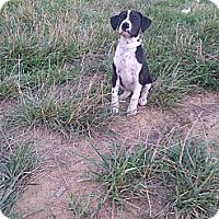 Adopt A Pet :: Joplin - Russellville, KY