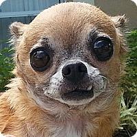 Adopt A Pet :: Gia - Orlando, FL