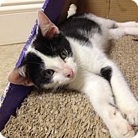 Adopt A Pet :: Anderson - Island Park, NY