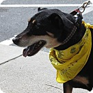 Adopt A Pet :: Uli