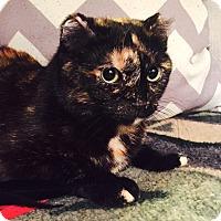 Adopt A Pet :: Leena - Addison, IL