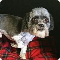 Adopt A Pet :: Otis Ranger - Urbana, OH
