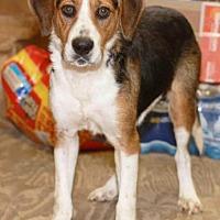Adopt A Pet :: Sprig - Rossville, TN