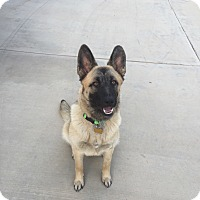 Adopt A Pet :: Carly - Victorville, CA