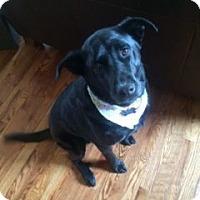 Adopt A Pet :: Marley - Colorado Springs, CO