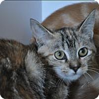 Adopt A Pet :: Nessa - Hyde Park, NY