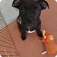 Adopt A Pet :: Lola - Mission Viejo, CA