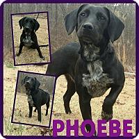 Adopt A Pet :: Phoebe - Tower City, PA