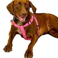 Adopt A Pet :: Tink great family dog - Sacramento, CA
