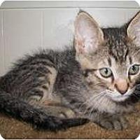 Adopt A Pet :: Bubba - Shelton, WA