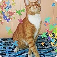 Adopt A Pet :: Bubba - Atlanta, GA