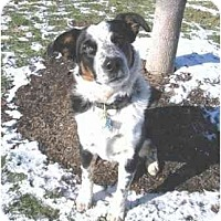 Adopt A Pet :: Jaxx--Courtesy Posting - Tiffin, OH