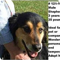 Adopt A Pet :: # 121-10 @ Animal Shelter - Zanesville, OH
