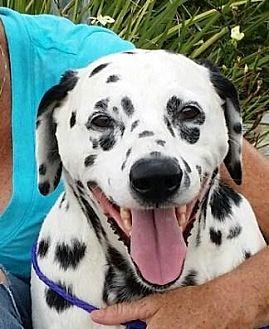 Gardena California Dog Rescue