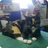 Adopt A Pet :: Fannie - Modesto, CA