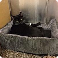 Adopt A Pet :: Amy - Colmar, PA