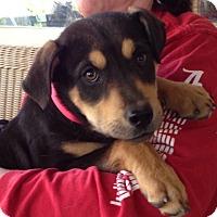 Adopt A Pet :: Abby - Hamburg, PA