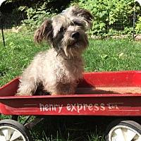 Adopt A Pet :: Lloyd - Bellingham, WA