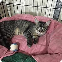 Adopt A Pet :: Keegan - Speonk, NY