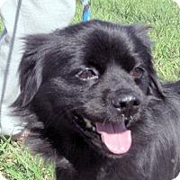 Adopt A Pet :: Weaver - Germantown, MD