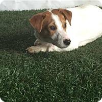 Adopt A Pet :: Trixie - San Francisco, CA