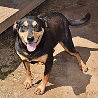 Terrier (Unknown Type, Medium)/Beagle Mix Dog for adoption in Iola, Texas - Dicksey
