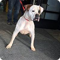 Adopt A Pet :: Ringo - Christiana, TN