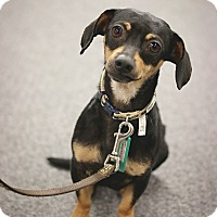 Adopt A Pet :: Baylor - New Oxford, PA