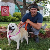 Adopt A Pet :: Bear - Elyria, OH