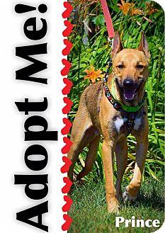 German Shepherd Dog Mix Dog for adoption in Mount Hope, Ontario - Prince