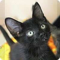 Adopt A Pet :: LICORICE - Red Bluff, CA