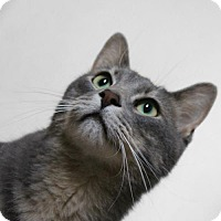 Adopt A Pet :: Lokie - Cedar Rapids, IA