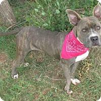 Adopt A Pet :: TEVA - Oklahoma City, OK
