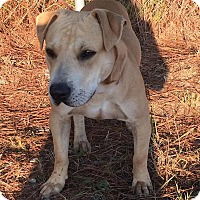Adopt A Pet :: Zeus - Arlington, MA