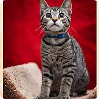 Adopt A Pet :: Axel C1520 - Shakopee, MN