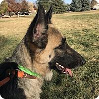 Adopt A Pet :: MILLA - Littleton, CO