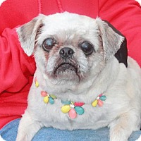 Adopt A Pet :: Addie - Garfield Heights, OH
