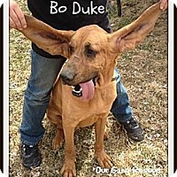 Adopt A Pet :: Bo Duke - Cincinnati, OH