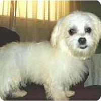 Adopt A Pet :: Sienna - Mooy, AL
