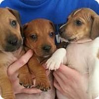 Adopt A Pet :: Babie Boys! - Marlton, NJ