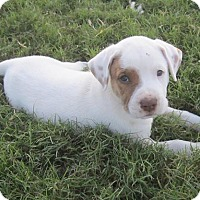 Adopt A Pet :: Ryder - Copperas Cove, TX