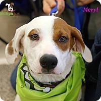 Adopt A Pet :: Meryl - Alpharetta, GA