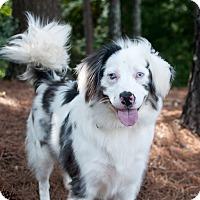 Adopt A Pet :: Emma - Atlanta, GA