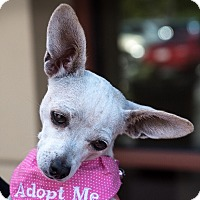 Adopt A Pet :: Opal - San Marcos, CA