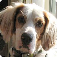 Adopt A Pet :: BIRDIE - Pine Grove, PA