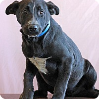 Adopt A Pet :: Runt - Waldorf, MD