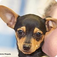 Adopt A Pet :: Finnick - Homewood, AL